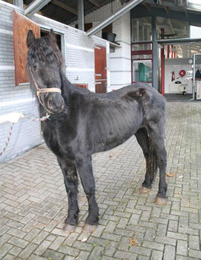 gebit_paard4-400